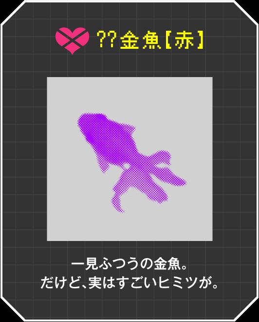 ??金魚【赤】